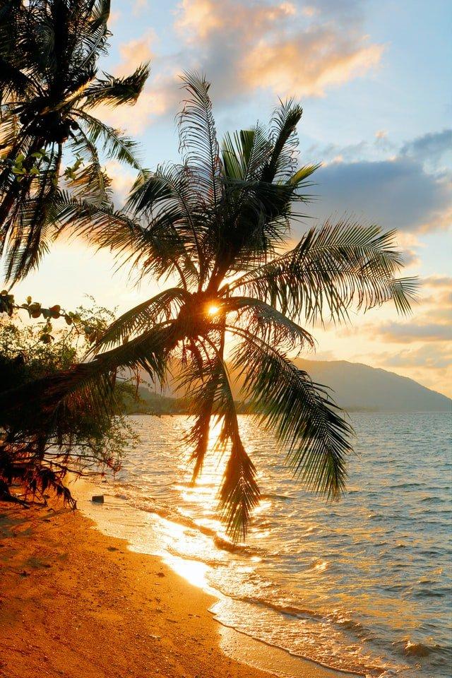 mare e palme al tramonto