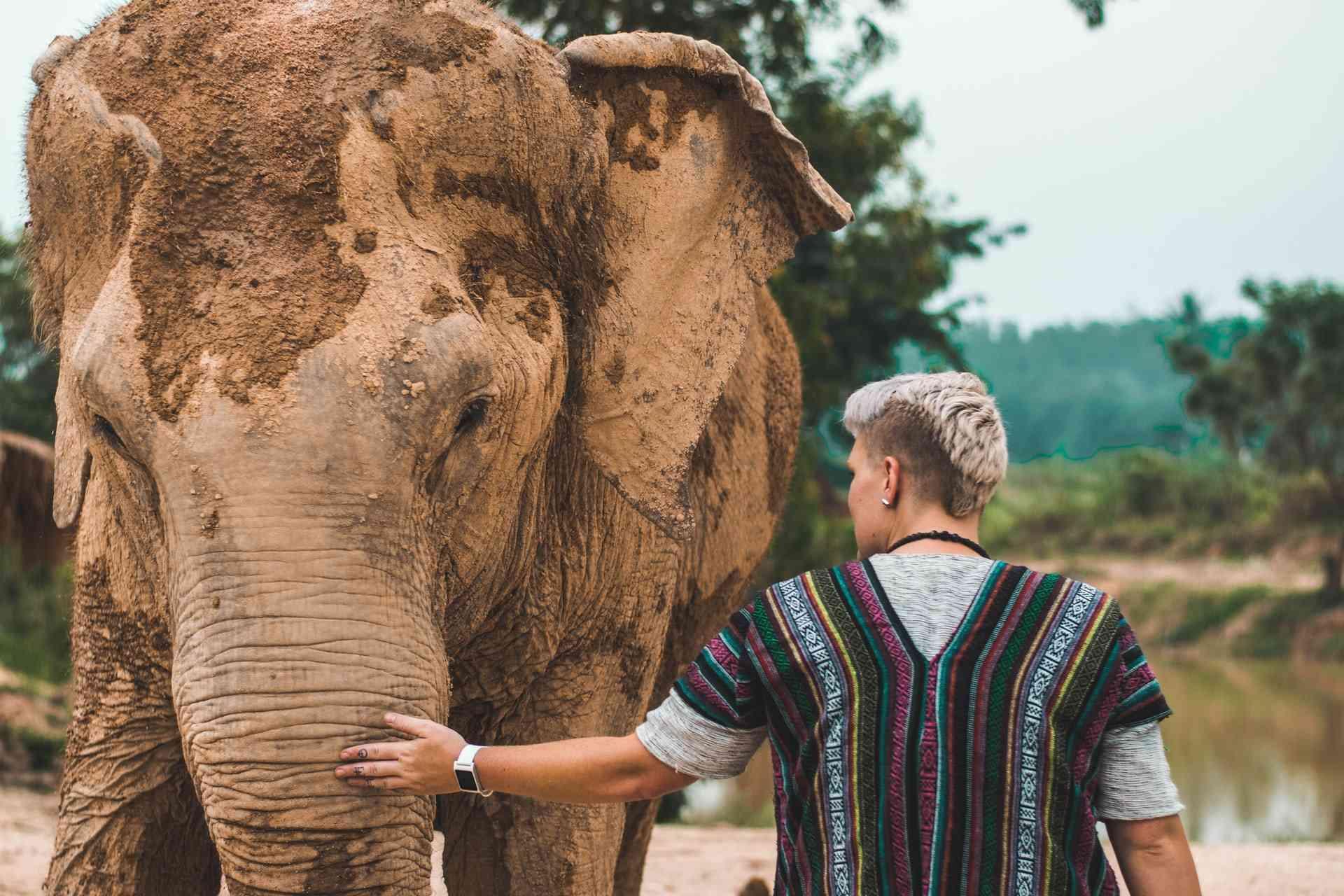 elefante Chiang Mai