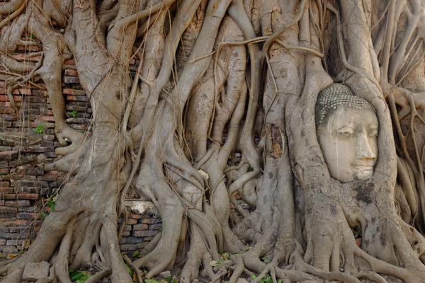 Buddha nell'albero
