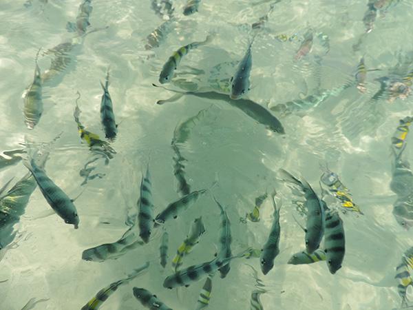 Costa orientale Thailandia mare