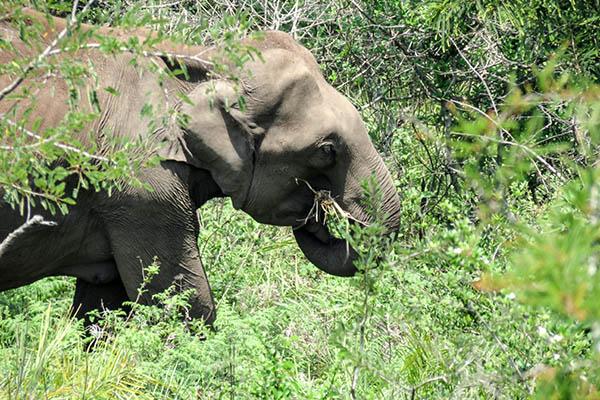 Visita al santuario degli elefanti di Koh Samui